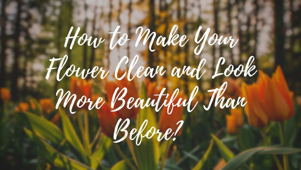 How to Make Your Flower Clean and Look More Beautiful Than Before?