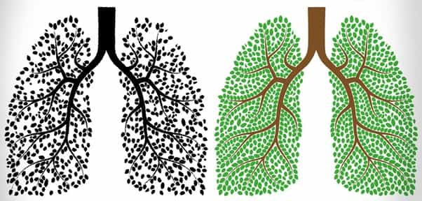 6 Ways to Cleanse Your Lungs After Quitting Smoking