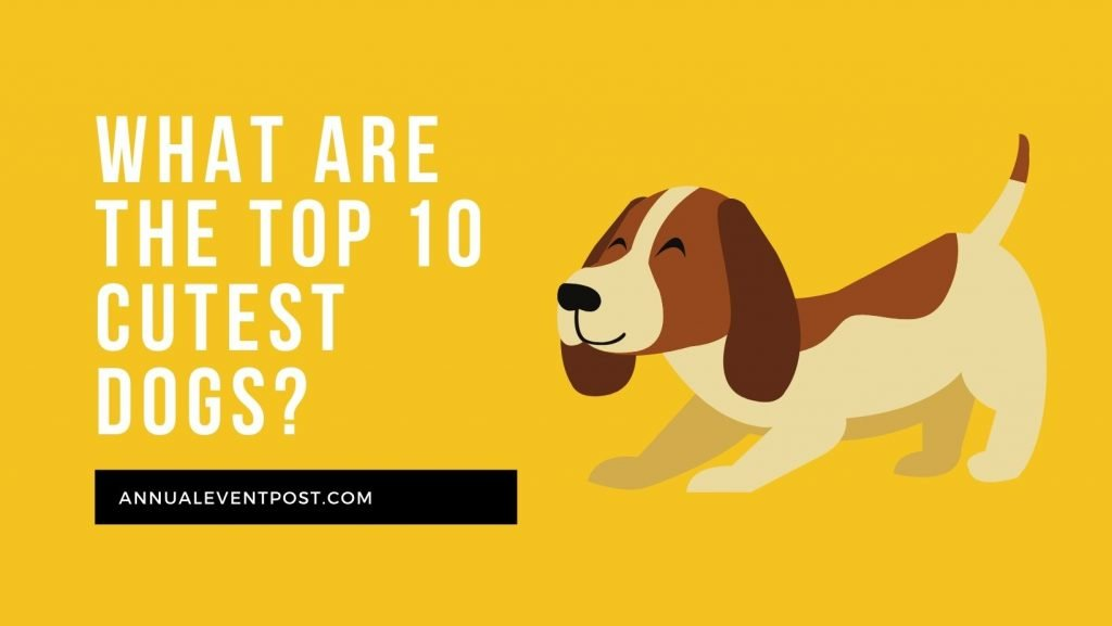 Top 10 cutest dogs