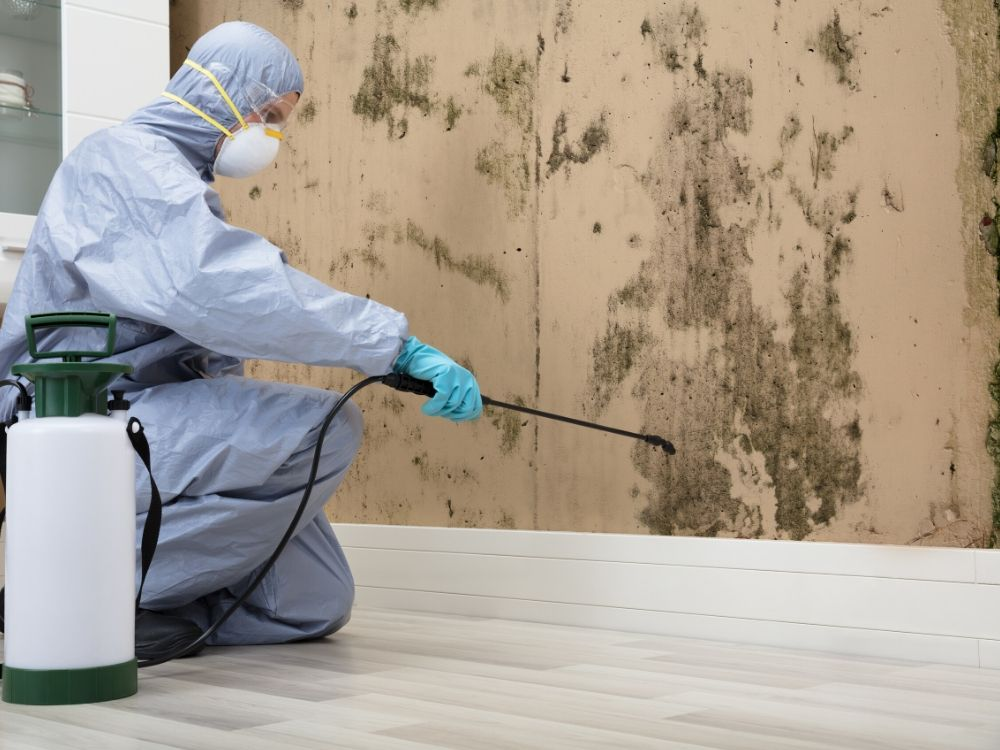 Why Should You Hire a Professional for Mold Removal in Aurora Co?